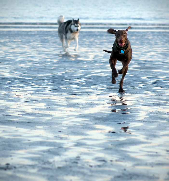 Two dogs running on the beach in late afternoon light.
