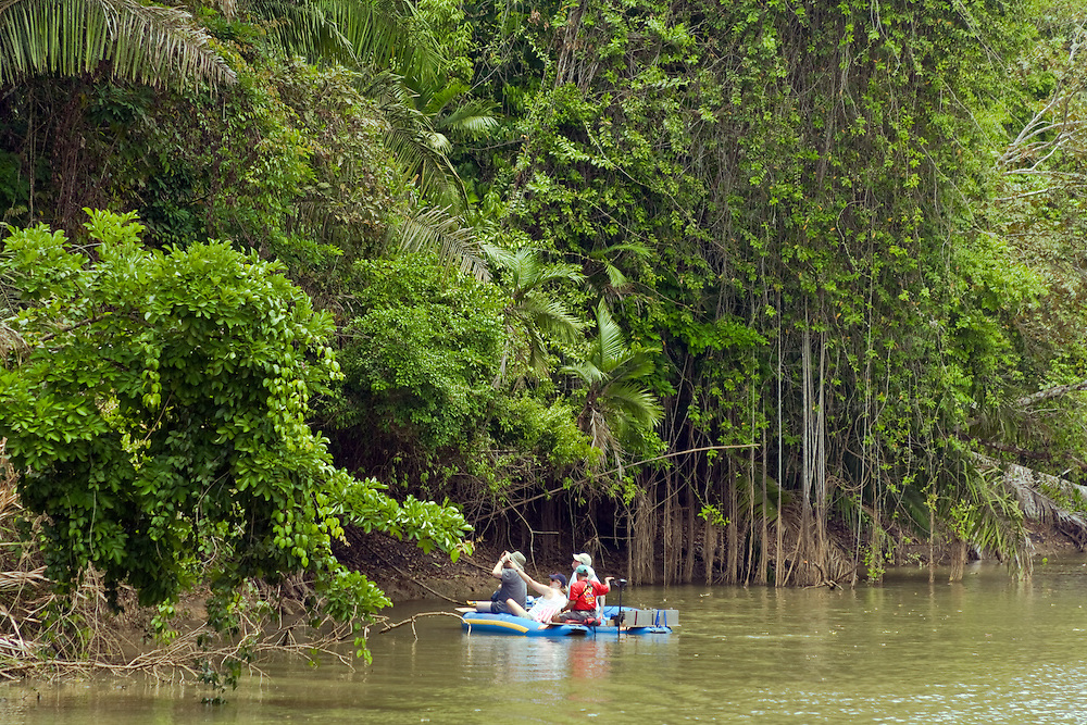 Alajuela Province, Costa Rica:  Exploring the Rio Frio puts you very close to an abundant collection of wildlife.