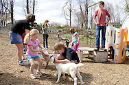 Cornwall, New York  - Children feed dairy goatsfrom bottles at Edgwick Farm in Cornwall on April 15, 2012. The farm uses milk from the goats to produce artisan cheese.