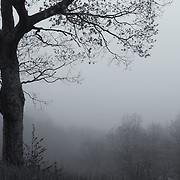 &quot;Silent Poem 2&quot; mono<br />
