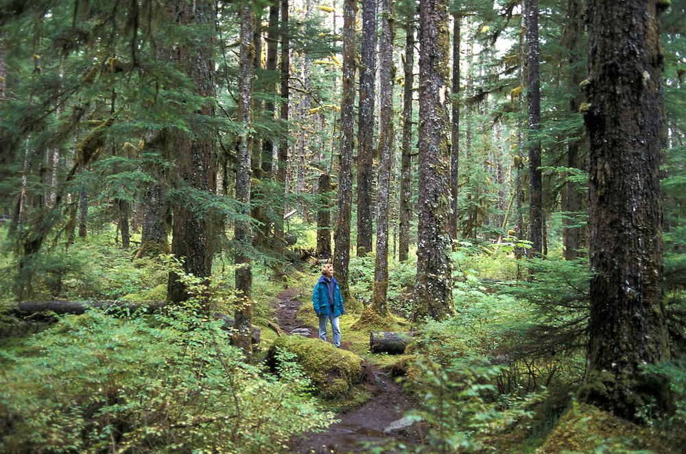Old Growth Forest, Bartlett Cove, Glacier Bay N.P., Alaska, USA