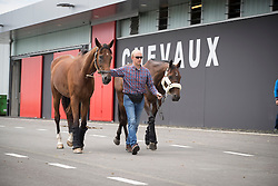 Team Belgium, Jef Desmedt, Fletsche van't Verahof, Lully des Aulnes<br /> Departure of the horses to the Rio Olympics from Liege Airport - Liege 2016<br /> © Hippo Foto - Dirk Caremans<br /> 30/07/16