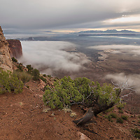 Sunrise brings a foggy start to the day deep in Buck Canyon, Canyonlands National Park, Utah.