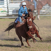 2016-07-30 Dungog Campdraft, NSW