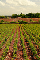 vineyards in Chassagne-Montrachet, Burgundy..Photo by Owen Franken for the NY Times..May 28, 2008.
