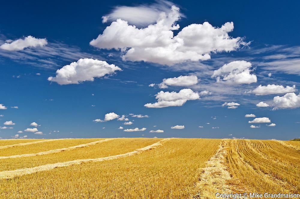 swath wheat and clouds<br /> near Bengough<br /> Saskatchewan<br /> Canada
