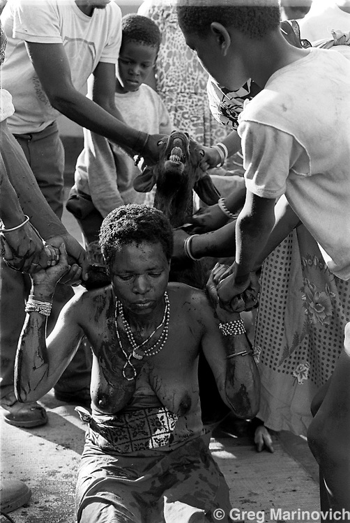 A sacrificial goat is killed over Sowetan Cookie Kashane at her initiation as Ndau medium / diviner at Dolly Village, Venda, South Africa Feb 4, 1991. (Greg Marinovich)