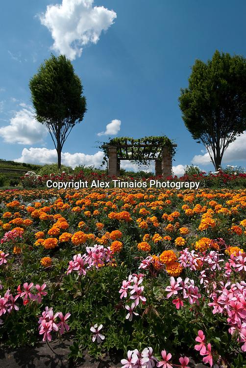 Colorul flowered field in Bad Dürkheim, Palatinate, Germany