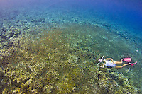 Snorkeling with manahak school (baby rabbitfish) in May 2013. Guam, Gun Beach, rabbitfish, fish, coral reef, snorkel