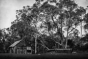 'Coming Home' is a personal series of images capturing the isolation, vastness and rugged beauty of landscapes around the South-West region of Western Australia; an area commonly referred to as 'Down South'. Returning to WA after an absence of 18 years was a strange experience. A combination of feeling home, but also one of feeling like a stranger after living in New York for a long period of time. Listening to the silence; the rustle of leaves and branches swaying in the wind, waves crashing on the shore, is a way of reconnecting and coming home to myself.