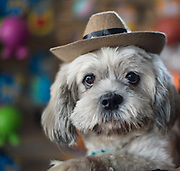 Bird wears his best hat at the Dogs Without Borders Adoption Fair.