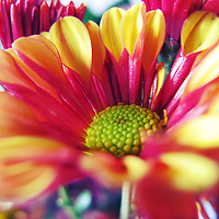 close up of a colorful flower