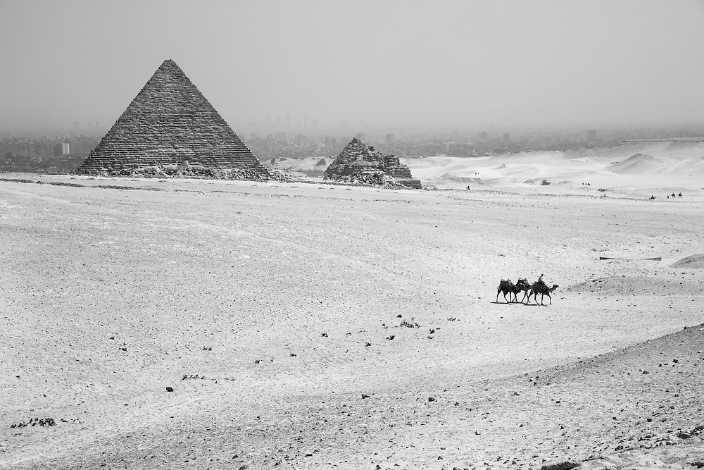 Egypt, Cairo, Tour guide rides string of camels through desert surrounding Pyramids in Giza