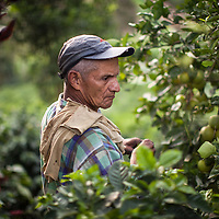 Colombia: Fairtrade coffee