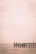 Pelicans on damaged pier in Lake Pontchartrain; Mandeville, Louisiana