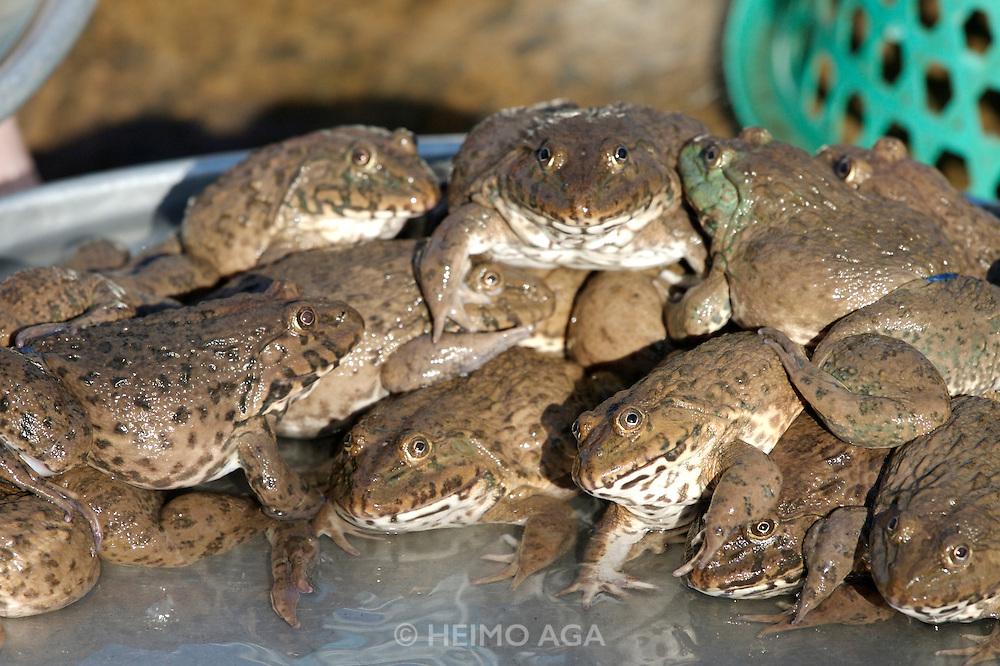 Cholon (Chinatown). Binh Tay Market. Frogs.