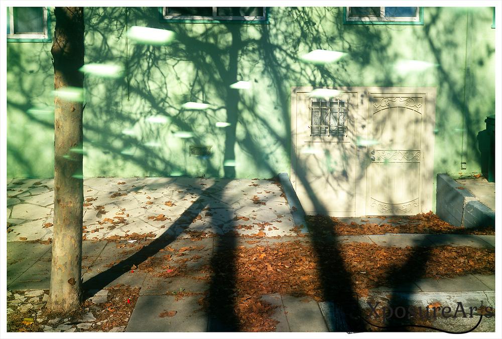 Tree Shadow on House