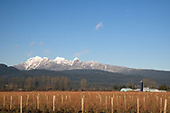 The Golden Ears (Mount Blandshard) tower above a blueberry field and other farms in Pitt Meadows, British Columbia, Canada.