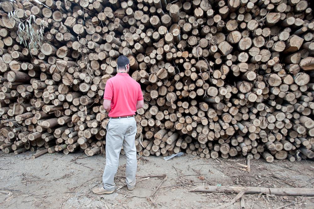 Man Checking Eucalyptus Wood Pile