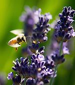 Wine - Biodiversity: sustainability, organics, biodynamics