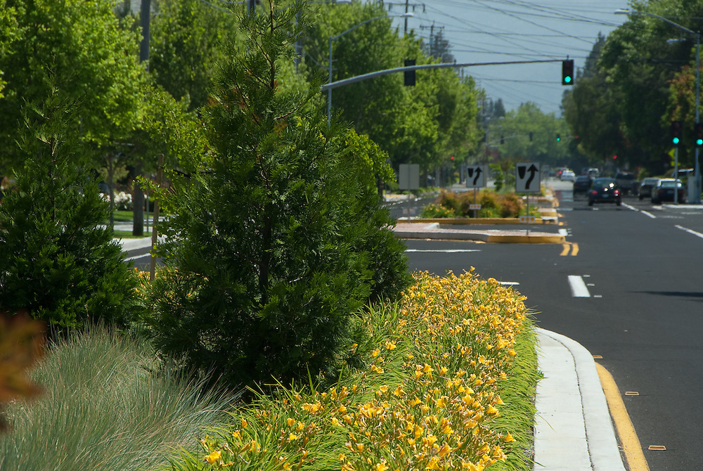 Landscape design along a median strip