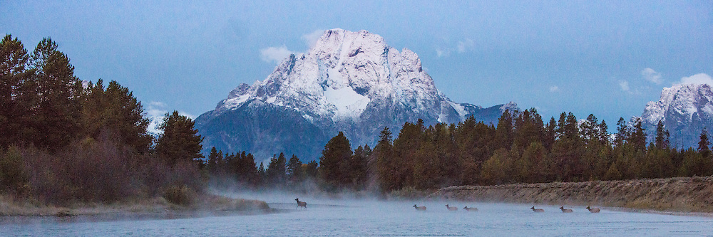 Elk Crossing the Snake River, Grand Teton National Park