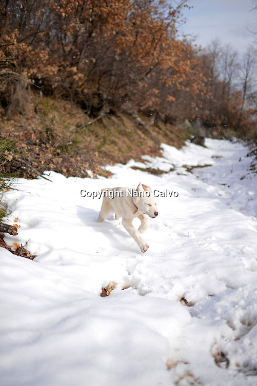 Cute white puppy walking in snowy mountains