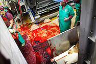 Meatco slaughterhouse adheres to EU standards and 80% of the Namibian meat is exported. Mainly to the UK but increasingly to Norway and Denmark. The US will start importing in 2012.