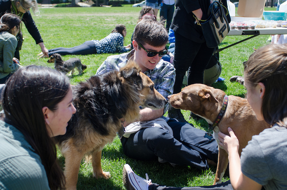 2016-04-30-Medford/Somerville-Tufts University-Ellis Oval-Dogs, dog walkers, and dog owners participating in Animal Aid gather near the Ellis Oval (Alex Knapp / The Tufts Daily).