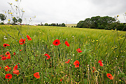 SOMME - FRANCE-30th June 2016: The 100th anniversary of the Battle of The Somme in northern France. <br /> <br /> Memorial services are to be held at the Somme Memorial Site at  Thiepval and other areas around the Albert district to mark the 100th Anniversary of the Battle of the Somme which started on the 1st July 1916 in World War I.<br /> ©Ian jones/Exclusivepix Media<br /> <br /> Pic shows: MASH valley, on the front line where 2500 British, Australian and South African soldiers  died attacking the German trenches.<br /> <br /> Photo by Ian Jones