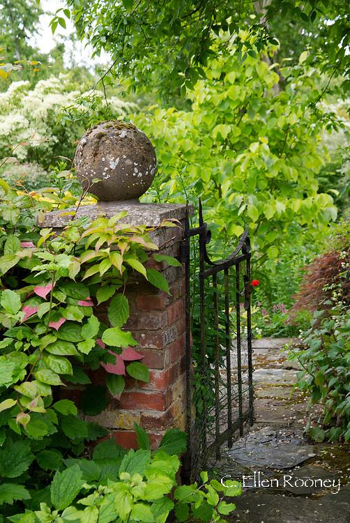 Actinidia kolomikta growing on a brick post at Stockton Bury Gardens, Kimbolton, Leominster, Herefordshire, UK