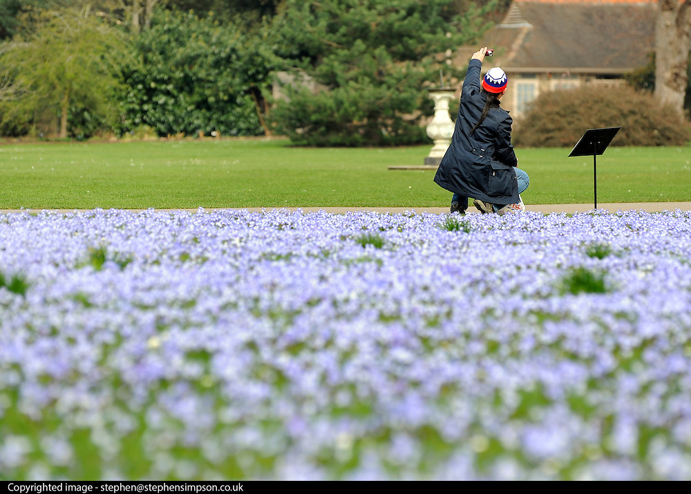 © Licensed to London News Pictures. 22/03/2012. Kew, UK. A man photographs himself amongst hundreds of  'Glory of the Snow' flowers. People enjoy the spring sunshine in The Royal Botanic Gardens at Kew today, 22 March 2012. Temperatures are set to reach 18 degrees celsius in some parts of the UK today. Photo credit : Stephen SImpson/LNP