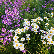 Flowers near Greensboro, North Carolina.