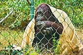 Chaffee Zoo