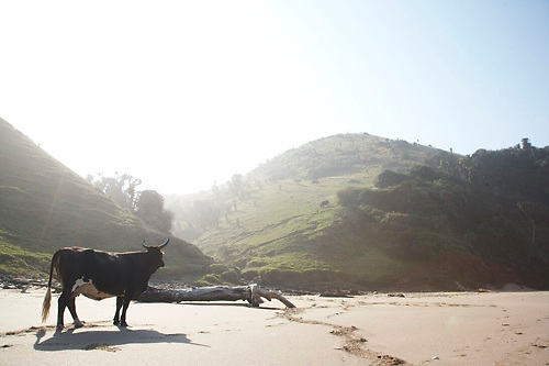 Travel, Transkei, South Africa ,Wild Coast