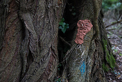 Denham, UK. 4 February, 2020. An ancient poplar tree in Denham Country Park threatened with imminent destruction by the HS2 high-speed rail link is decorated with the figures of tree spirits by environmental activists. It has also been marked with blue paint by HS2 engineers. Planned works in the immediate area are believed to include the felling of 200 trees and the construction of a roadway, Bailey bridge, compounds, fencing and a parking area. Credit: Mark Kerrison/Alamy Live News