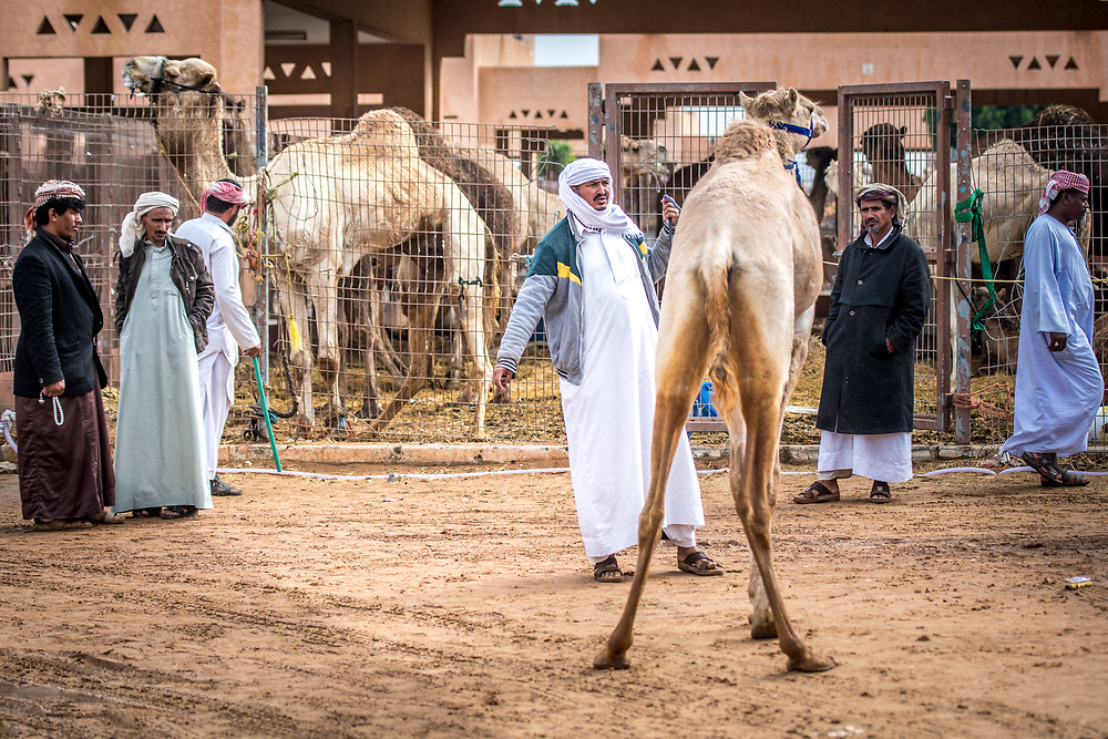 A farmer tries to lead a camel into another pen at the Al Ain Camel Market, UAE.