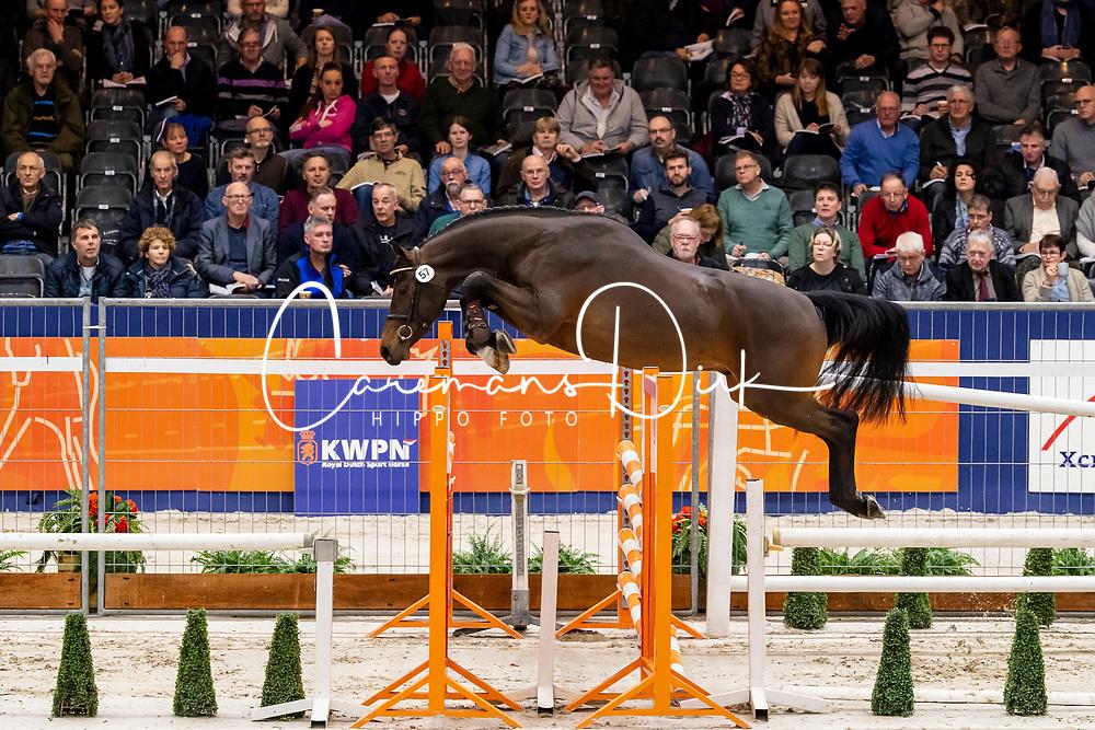057, Look A Like Twiggy BB<br /> KWPN Hengstenkeuring - 's Hertogenbosch 2019<br /> © Hippo Foto - Dirk Caremans<br /> 30/01/2019