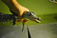 Created by Luc Fougeiroles in 1994, this farm, heated by heat recovery plant  &quot;Eurodif&quot; receive more than 350 crocodiles (9 different species).<br /> Since 1998, a research laboratory has been added to the Crocodile Farm, and ten giant tortoises from the Seychelles, a protected species, joined the crocodiles. They are 30 years old and weight from 80 to 150 kilos each.<br /> Even if in the wild, turtles are a delightful meal for the crocs, here that's not a problem at all....<br /> More info in the blog