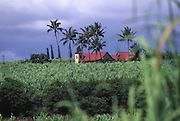 Church in canefield, Waimea, Kauai, Hawaii<br />