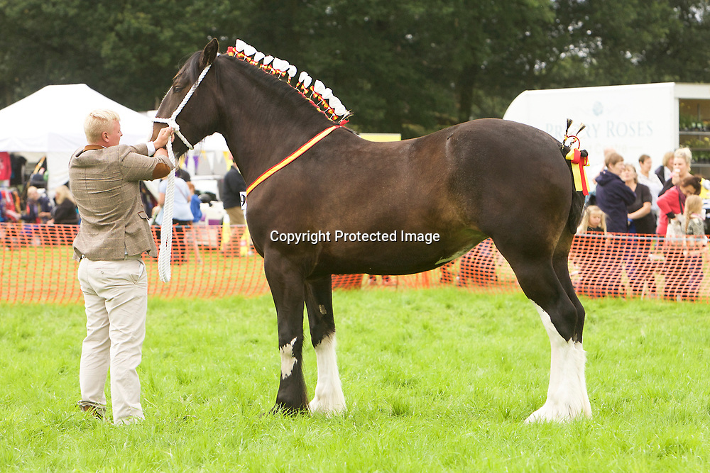 Shire Horse Classes at Woolley Horse Show 2017