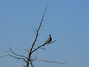 Fågel på en gren