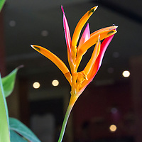 The photo of this flower was taken at the Blue Spirit Retreat Centre in Nosara, Costa Rica. The flower looked like a hand, with the thumb and middle finger touching, also known as Guyan Mudra.