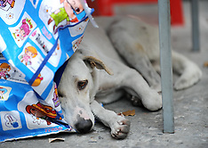 Street Dog's in Bangkok