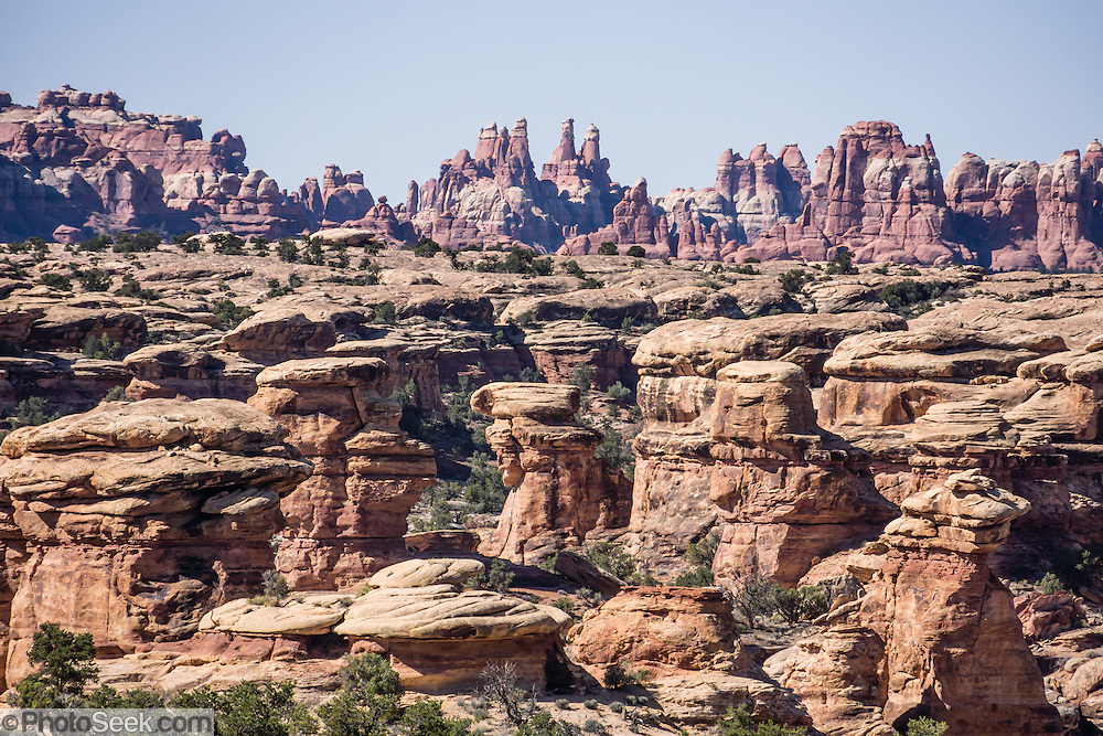 See good views of Needles District of Canyonlands National Park from the Slickrock Foot Trail, Utah, USA. The Permian rocks of the Needles District formed where red alluvial fans from the east interwove with white dunes from the west, making sandstone spires striped red and white.