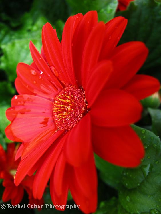 &quot;Spring Shower&quot;<br /> <br /> <br /> Flowers by Rachel Cohen