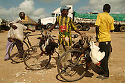 Southern Africa. Mozambique. Zambezi river ferry crossing. Young men selling chickens from their bicycles..DVD0014