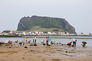Jeju Island. Seongsan Ilchulbong (Sunrise Peak) during low tide. People looking for stranded mussels, clams, shrimps and crabs.