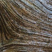 Macro image of the wood grain on a fallen log, Rose River Loop Trail, Shenandoah National Park, Virginia.