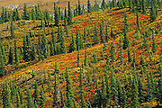 Autumn colors at Summit Lake.<br /> Stone Mountain Provincial Park<br /> British Columbia<br /> Canada